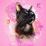 @tilly_the_tiny_tortie's profile picture on influence.co