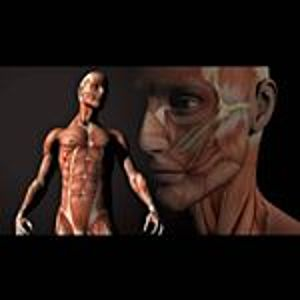 @anatomia.19's profile picture on influence.co