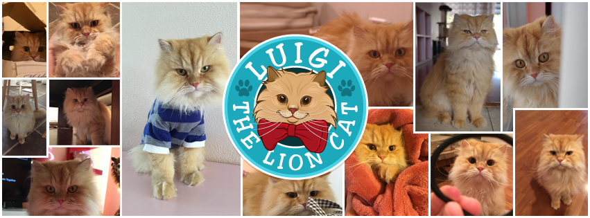 Luigi the lion cat collage copy