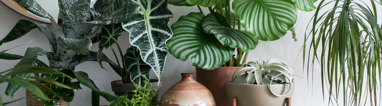 Urban jungle book igor happy interior blog