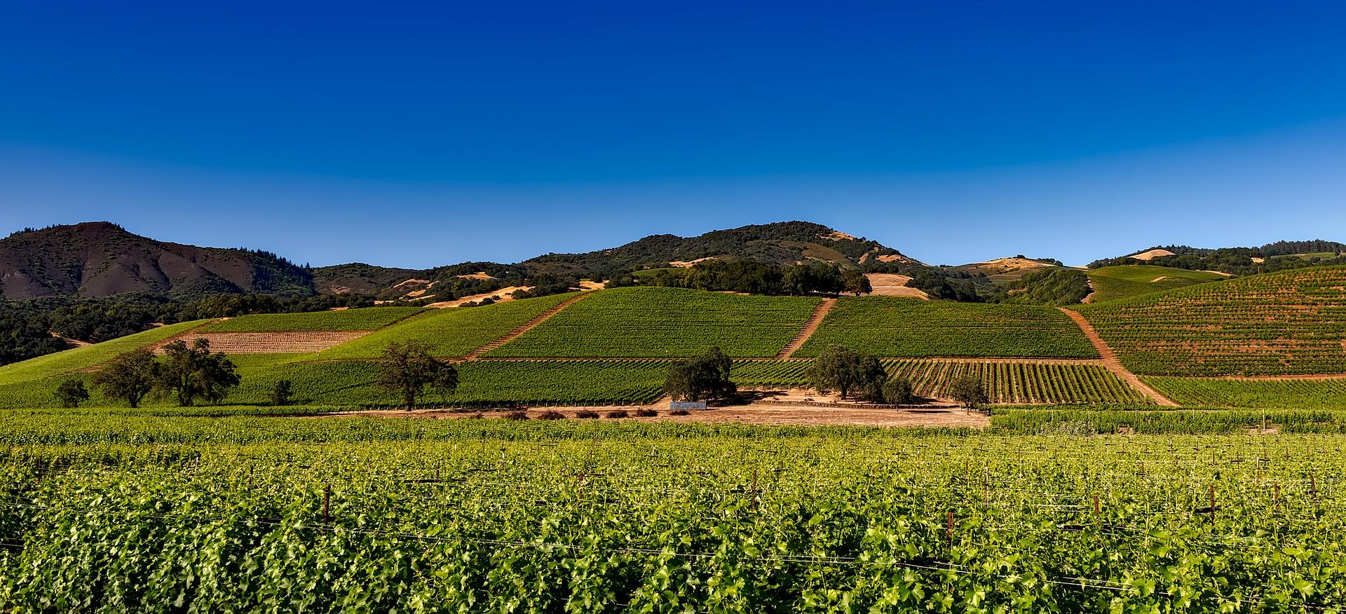 Vineyards 1590014 1920