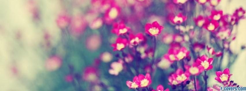 Flowers nature 5 facebook cover timeline banner for fb