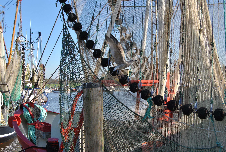 Fishing boat 1052863