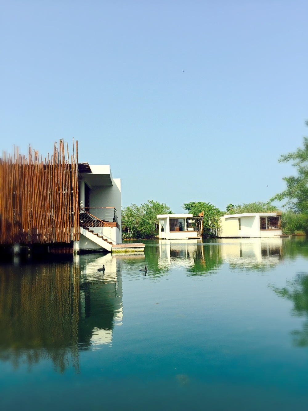 @janetgunngratefulgardenia's cover photo for 'ROSEWOOD MAYAKOBA'