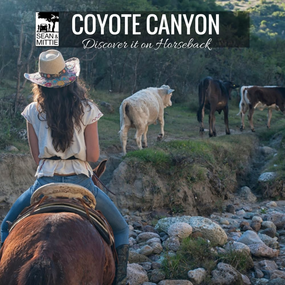 @mittieroger's cover photo for 'Discovering Coyote Canyon on Horseback - Sean and Mittie'
