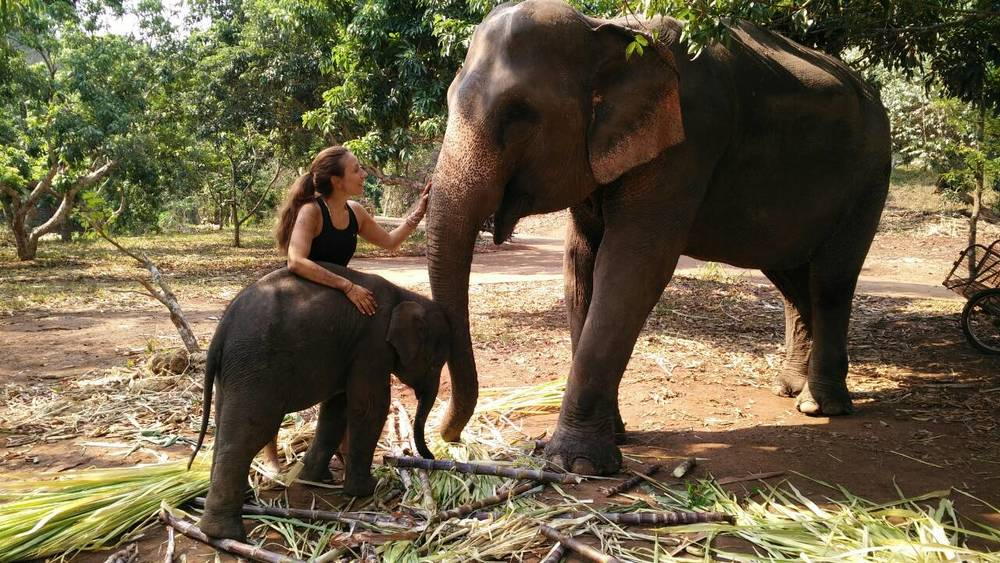 @trustedtravelgirl's cover photo for 'The Travel Pants That are Saving Elephants' Lives'