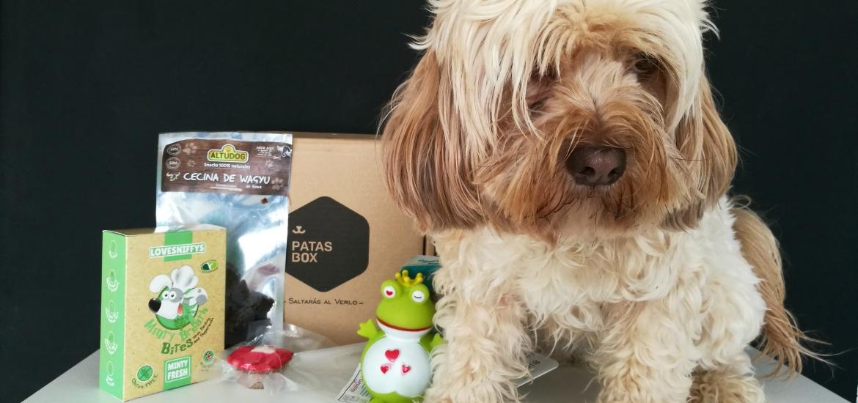 @blogdeuma's cover photo for 'Caja de San Valentín para perros, de la mano de Patasbox - El blog de Uma'