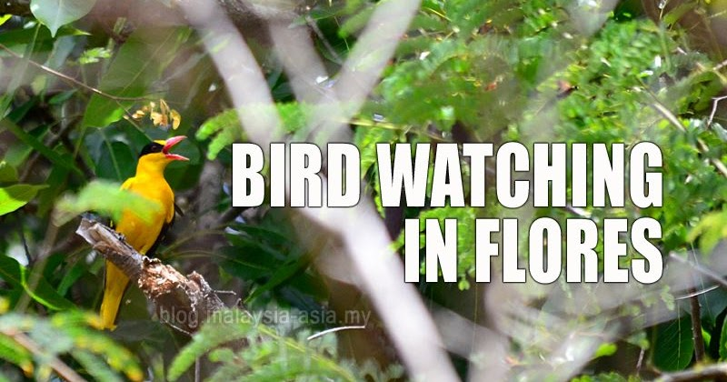 @malaysiaasia's cover photo for 'Bird Watching in Flores'