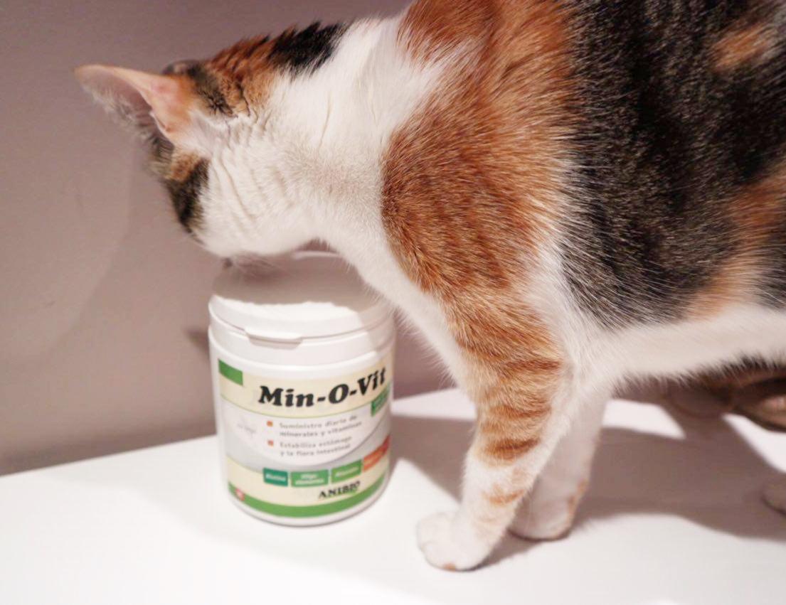 @lucca.laloca's cover photo for 'Fortalecer el sistema inmune de nuestros perros y gatos'