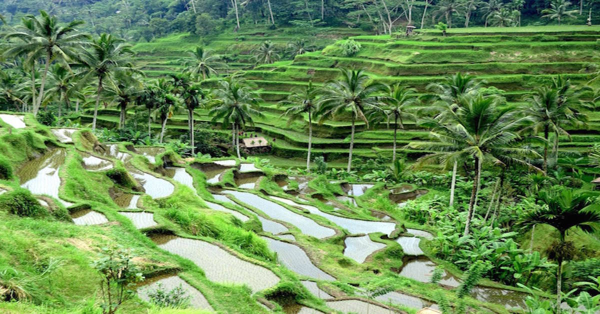 @thetravelninjaz's cover photo for 'There's more to Bali's rice terraces than surface beauty.'