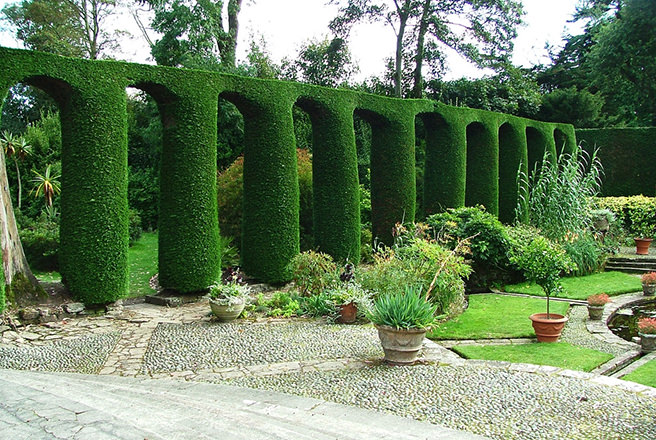 @hisforhome's cover photo for 'Caring for your Leylandii hedge - H is for Home Harbinger'