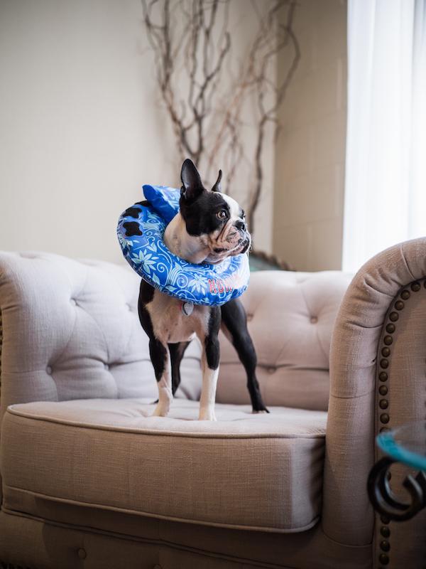@maggielovesorbit's cover photo for 'Dog Cone E-Collar Review'
