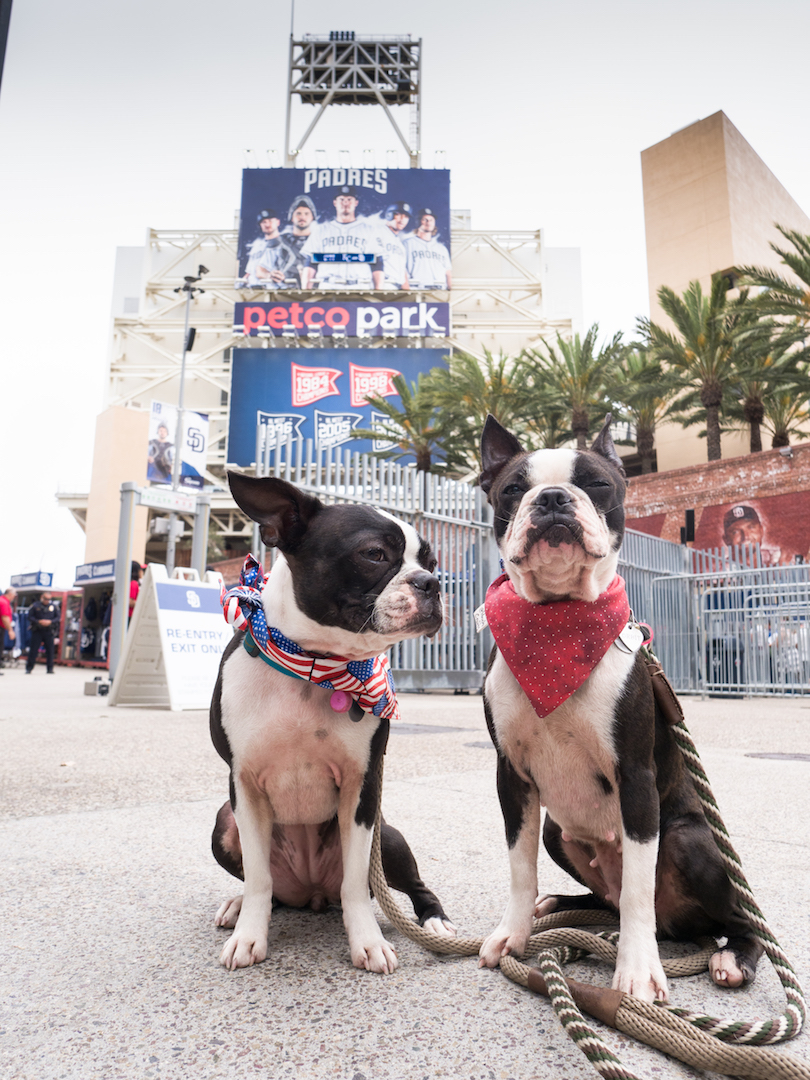@maggielovesorbit's cover photo for 'Pregaming for Petco Park's Dog Days of Summer & Barkyard Doggie Box Suites'