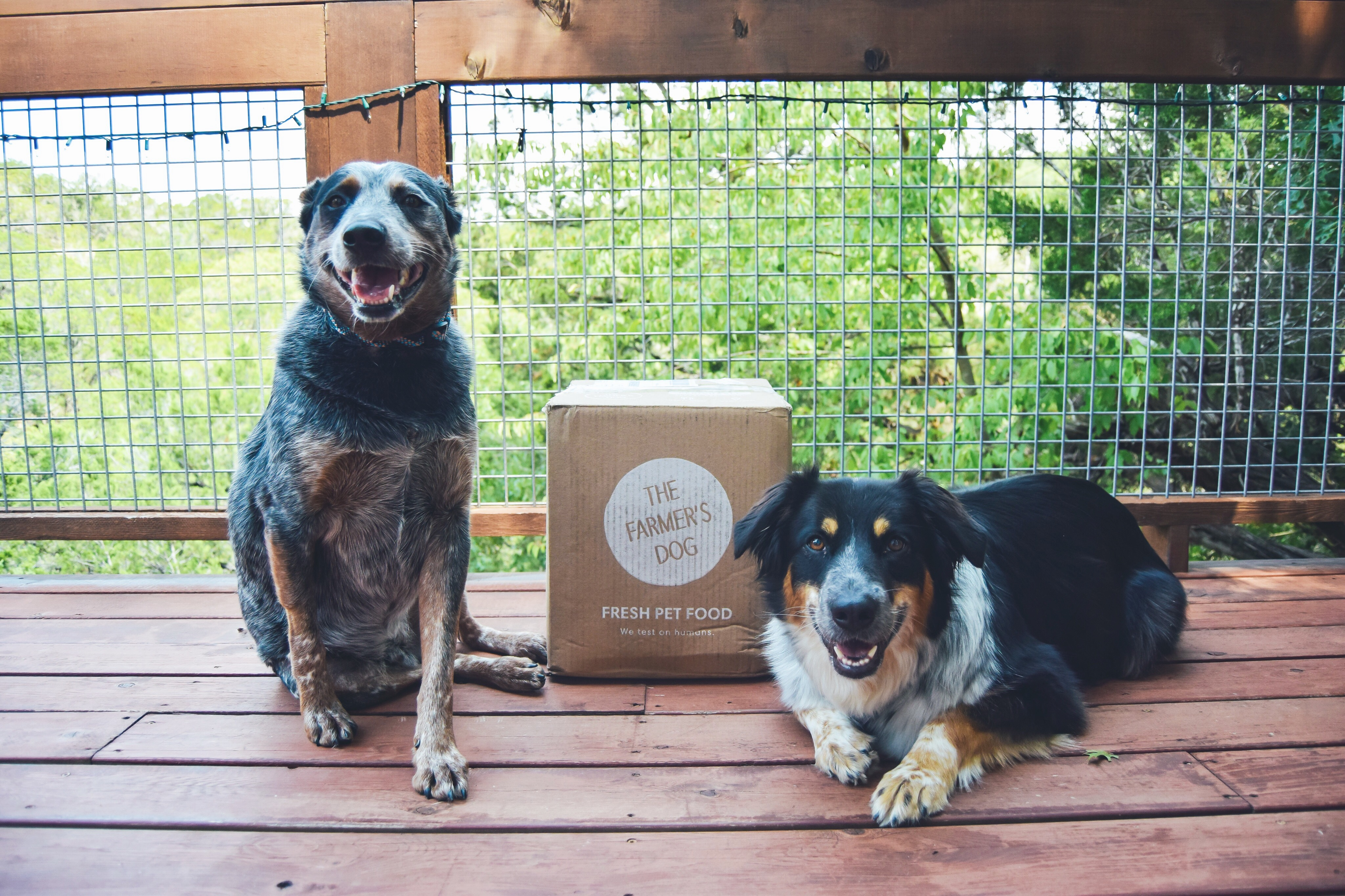 @amandakwaltman's cover photo for 'The Farmer's Dog: A Smarter Pet Food, Home Delivered. | The Brilliant Balance'