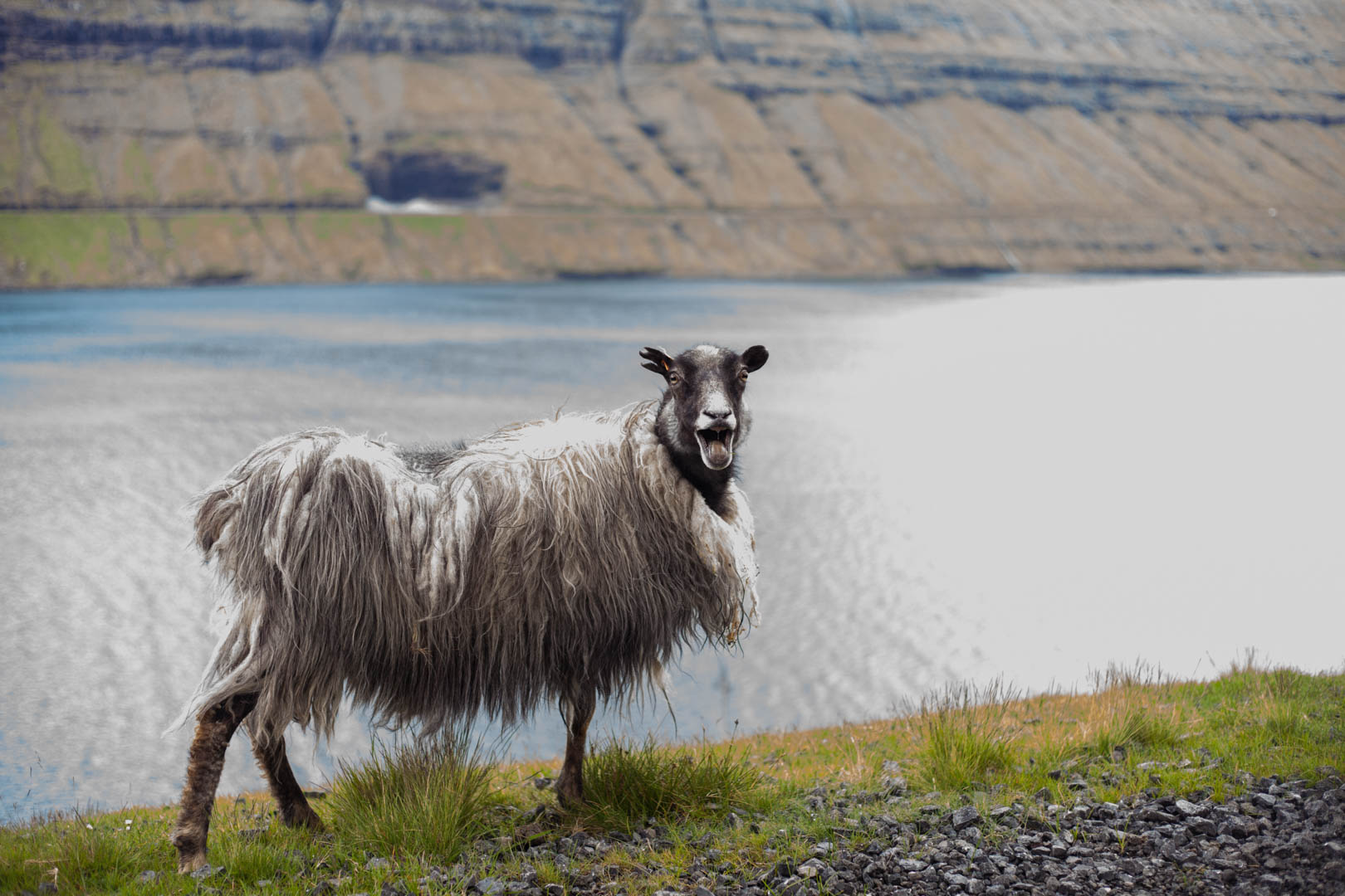 @watchmesee's cover photo for 'How to learn Faroese for a trip to the Faroe Islands | WatchMeSee.com'