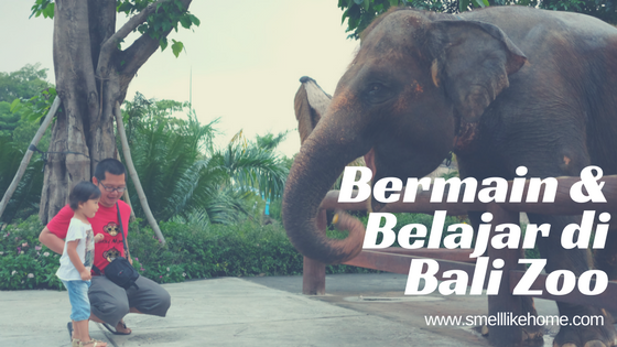 @smelllikehome's cover photo for 'Serunya Bermain & Belajar di Bali Zoo Extension | Smell Like Home'