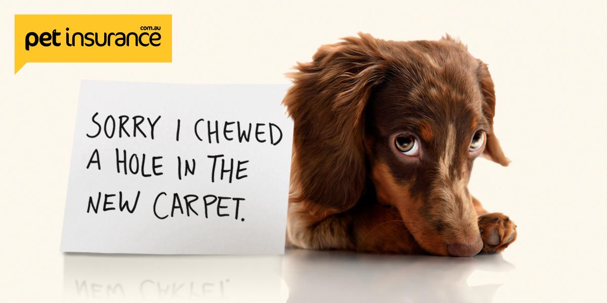 @sausagedogcentral's cover photo for '6 reasons to consider pet insurance | Petinsurance.com.au'