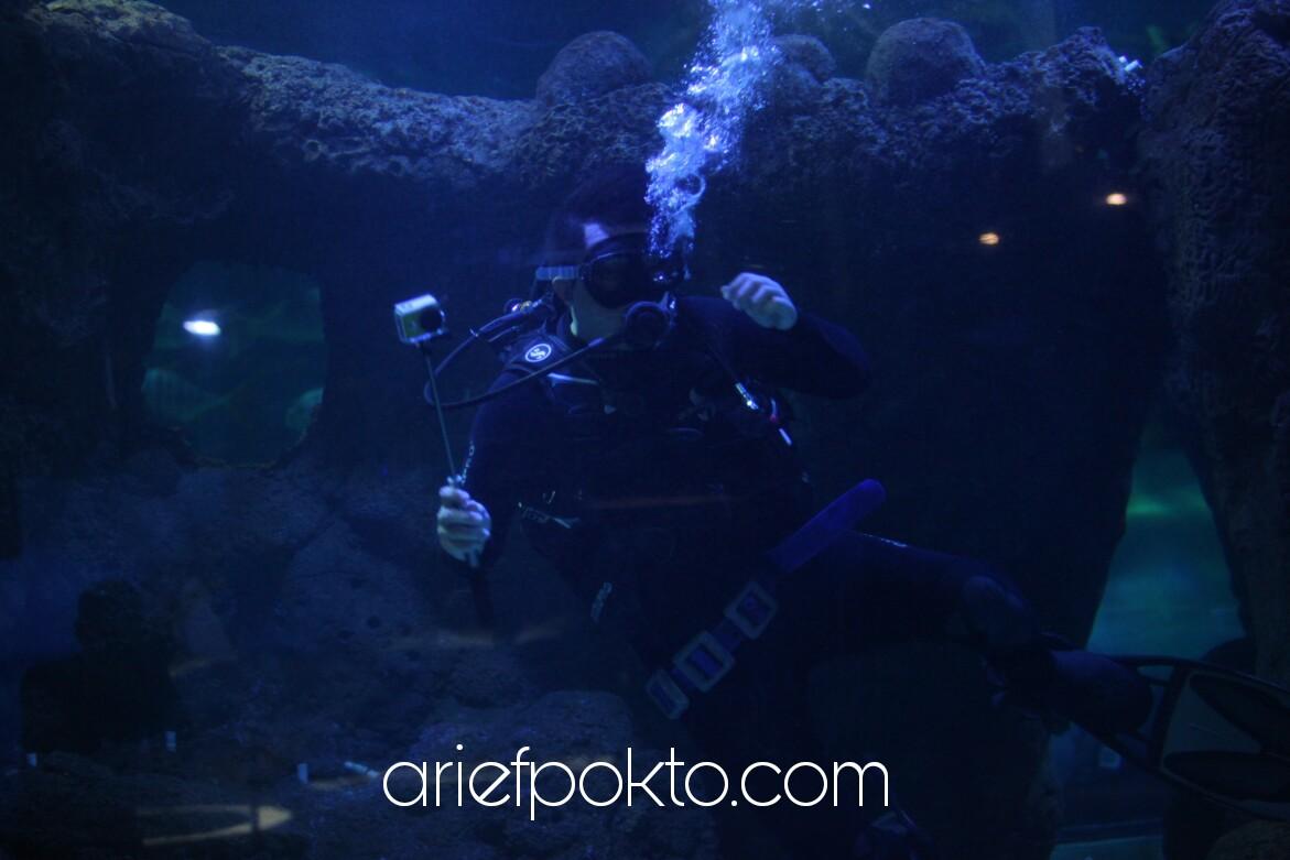 @ariefpokto's cover photo for 'Kembali Ke Seaworld Ancol · AriefPokto.com'