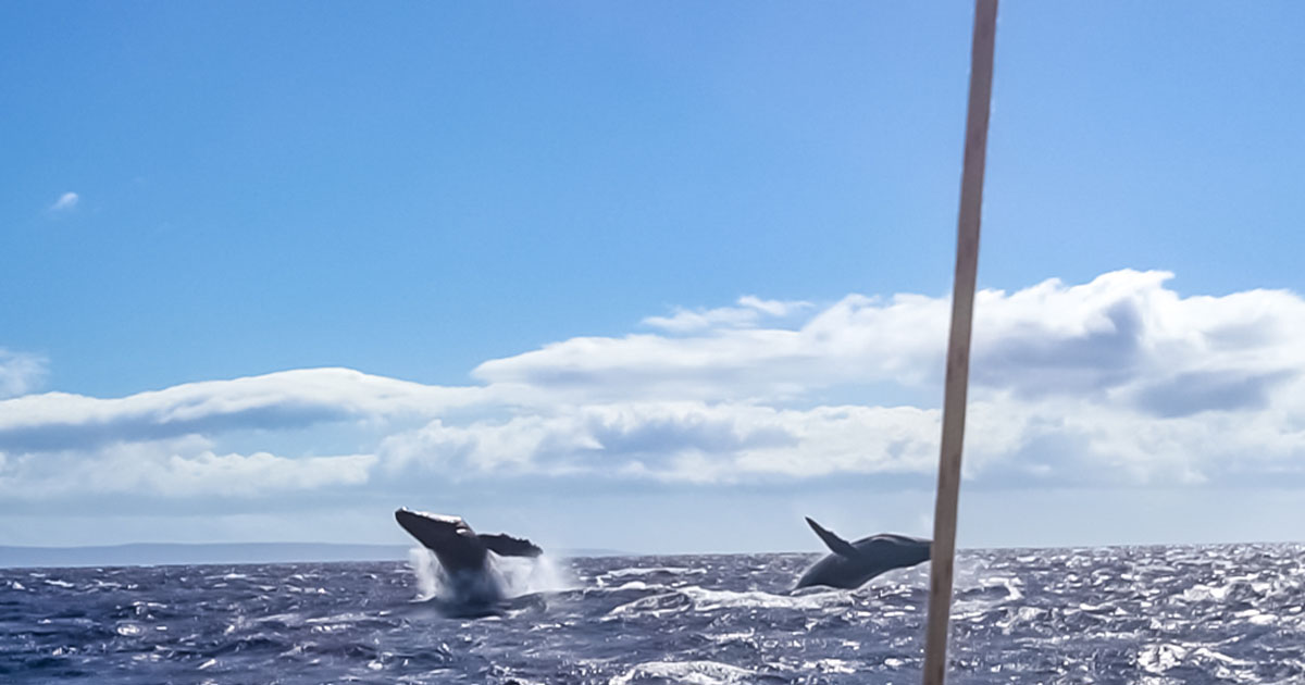 @businesstravelerswife's cover photo for '10 Things to Know Before You Go Whale Watching in Maui'
