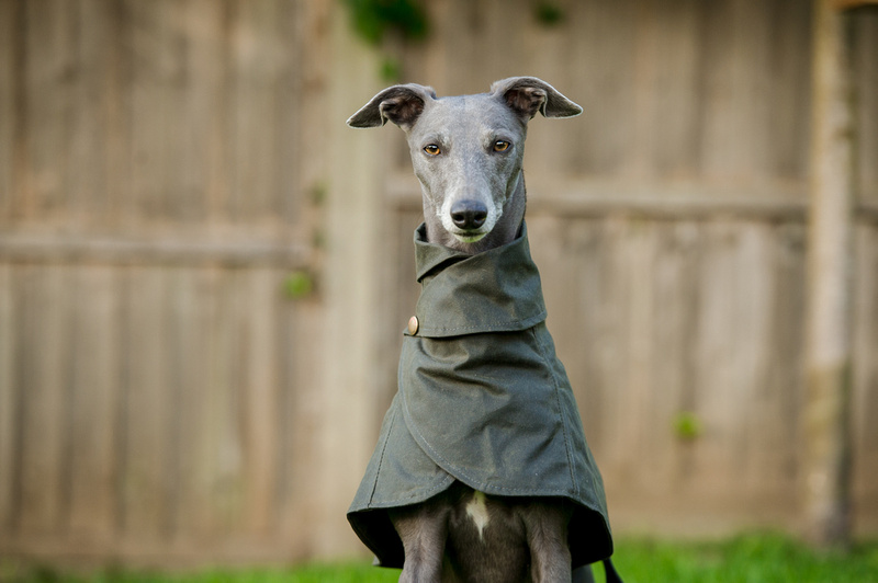@whippetsnippets_photography's cover photo for 'Redhound For Dogs Jumpers and Coats'