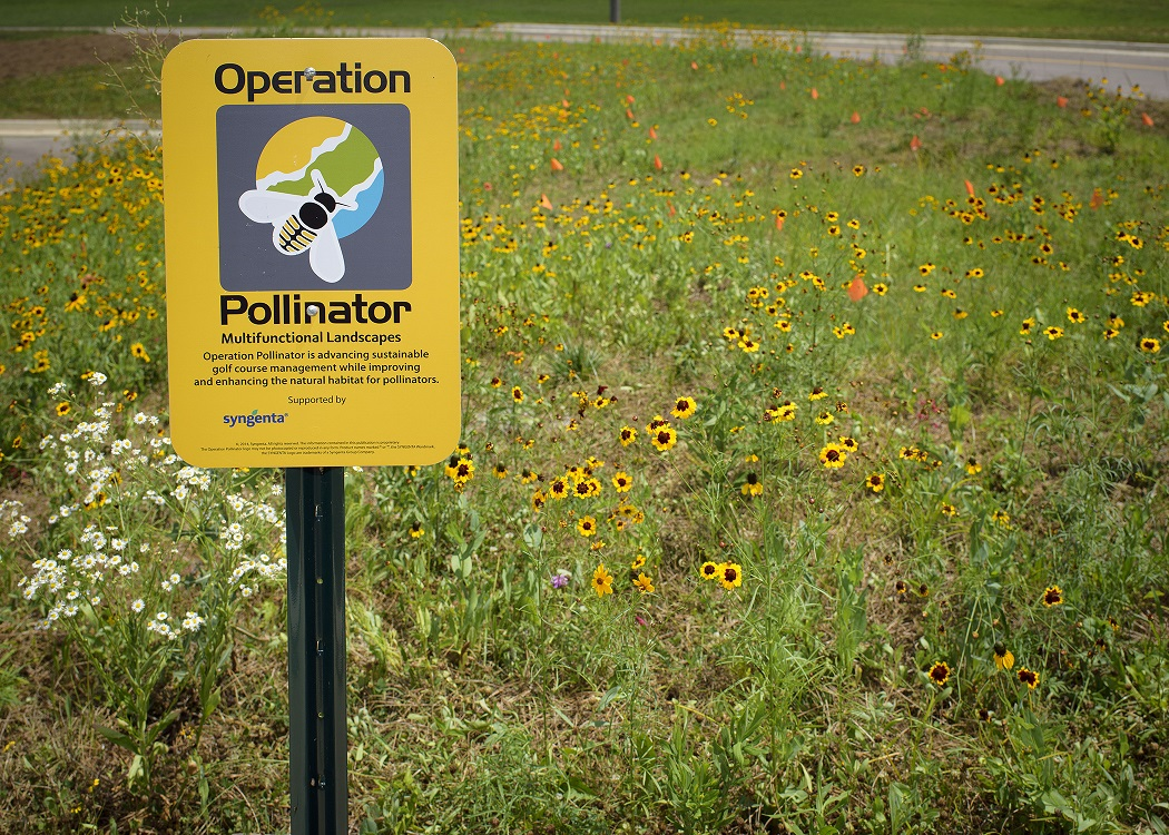 @mikibreitner's cover photo for 'What is the importance of pollinators in a golf club?'