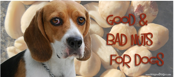 @wagthedog_uk's cover photo for 'Good Nuts & Bad Nuts For Dogs -Know Your Nut & Why'