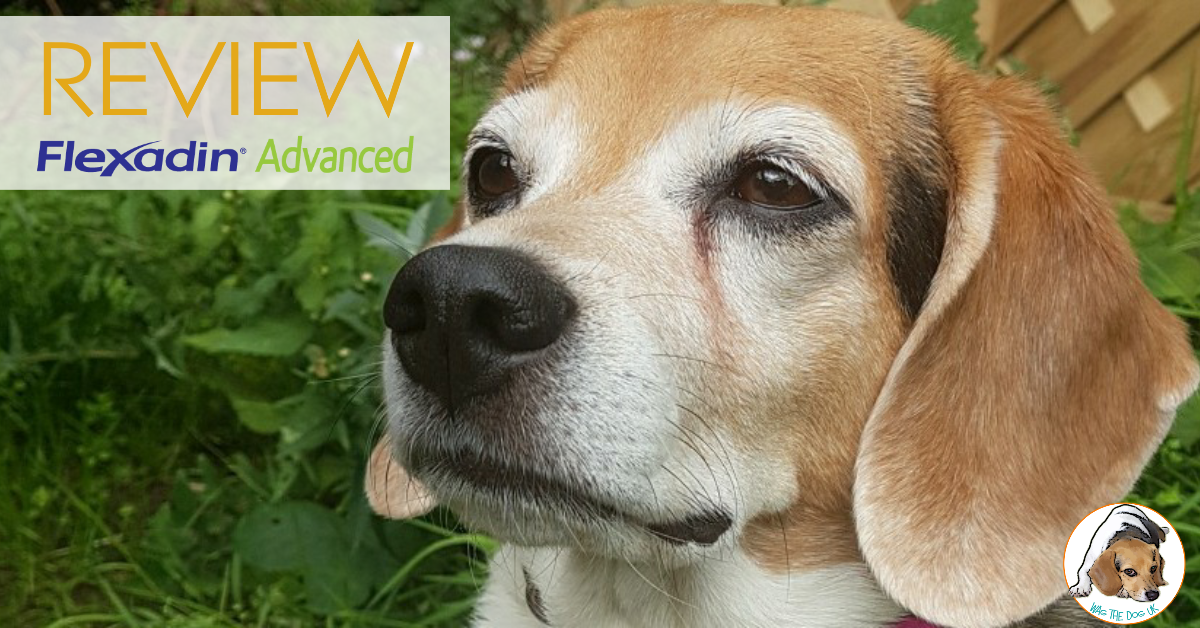 @wagthedog_uk's cover photo for 'Review: Flexadin -Keeping An Old Dog Healthy & Happy - Wag The Dog UK'