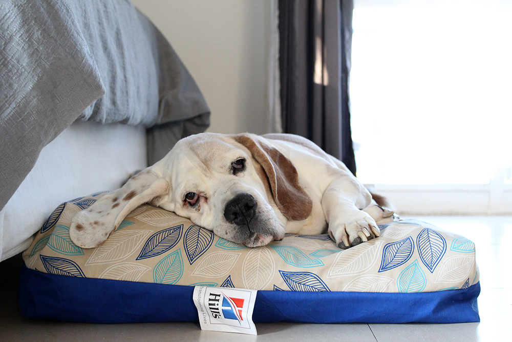 @stylish_paws's cover photo for 'Product Review: Hill's Dream Maker Pillow - Stylish Paws'