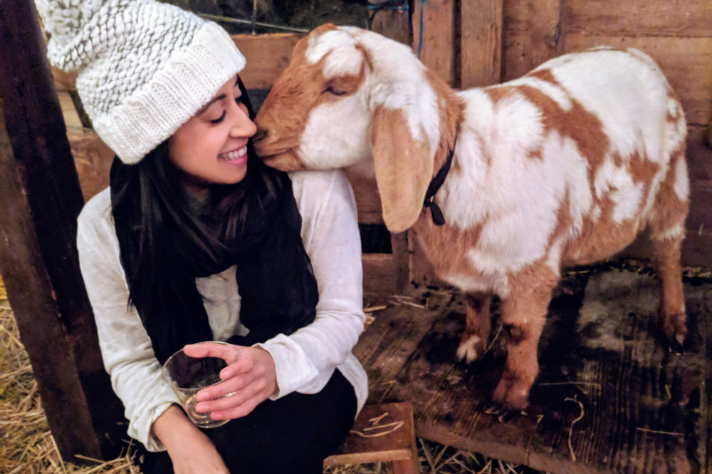 @sevendayweekender's cover photo for 'GOAT YOGA: 2018's Cutest Fitness Craze'