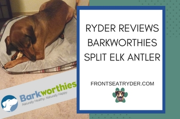 @frontseatryder's cover photo for 'Are Elk Antler chews good for my dog?'