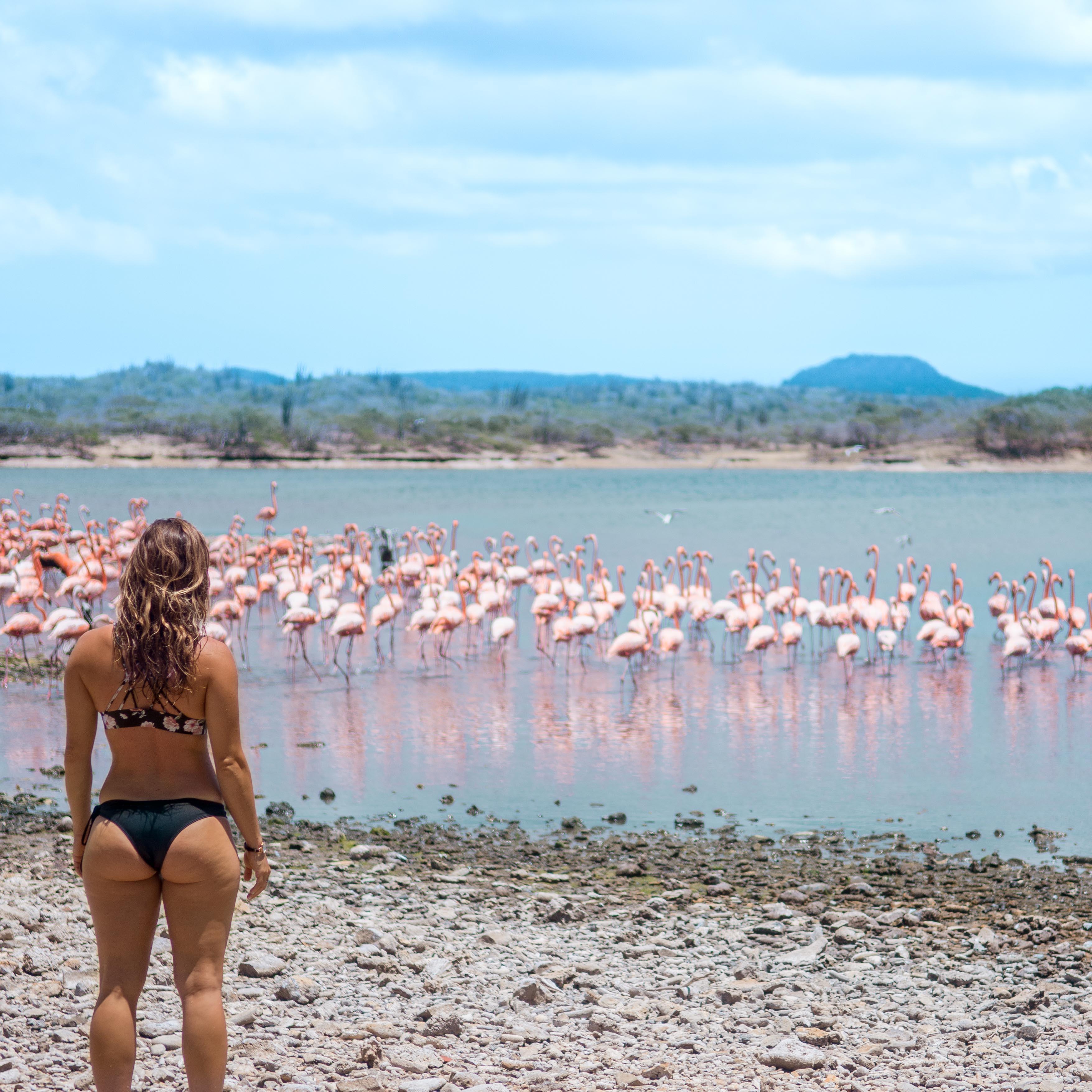 @laurenrudick's cover photo for 'WELLNESS IN BONAIRE - Lauren Rudick'