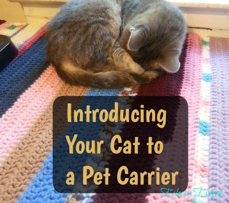 @eclecticevelyn's cover photo for 'Introducing Your Cat to A Pet Carrier'