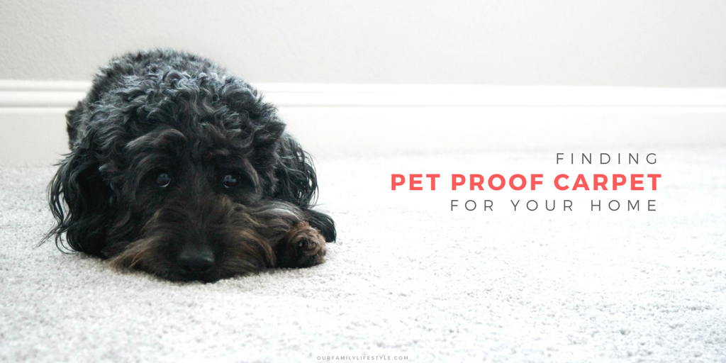 @our.familylifestyle's cover photo for 'Finding Pet Proof Carpet for Your Home | The Home Depot'