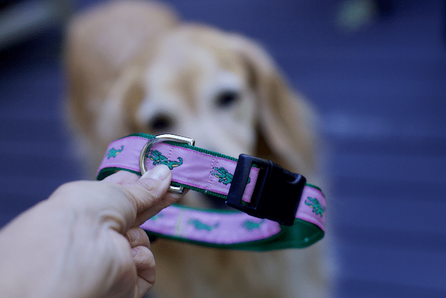 @stayclosetohome's cover photo for 'DIY Pet Projects: Adjustable Collar for A Cool Puppy'