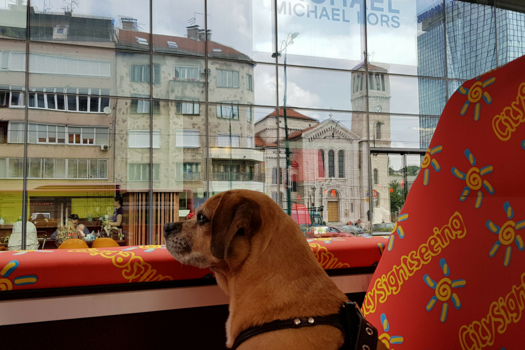 @travelingonaleash's cover photo for 'Touring with City Sightseeing in Sarajevo | Traveling On A Leash'
