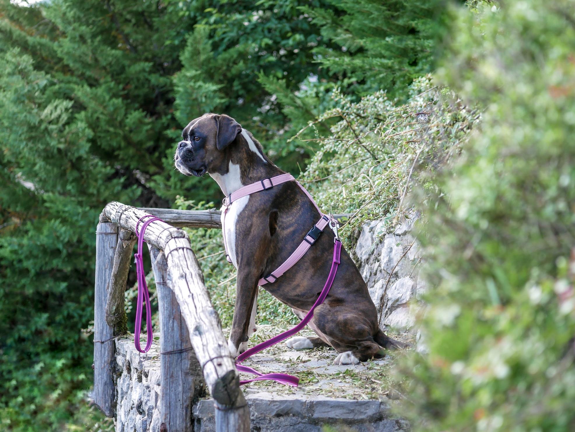 @chimera.boxer's cover photo for 'Custom rubberized leash Connecto.dog | Il Blog a misura di zampa | The paw-sized blog | CHIMERA BOXER'