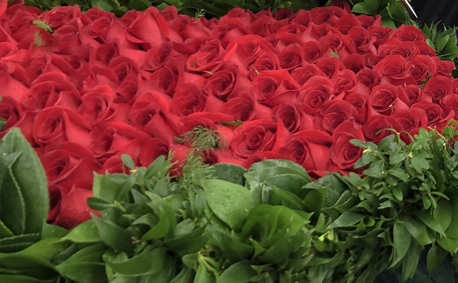 @type.a.style's cover photo for 'Garland of Roses: A Kroger Event'