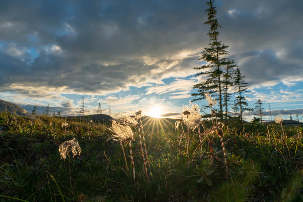 @kirstenalana's cover photo for 'Visiting Churchill, Manitoba in Summer - Kirsten Alana'
