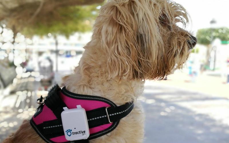 @blogdeuma's cover photo for 'Tractive: el localizador GPS en tiempo real para tu perro'