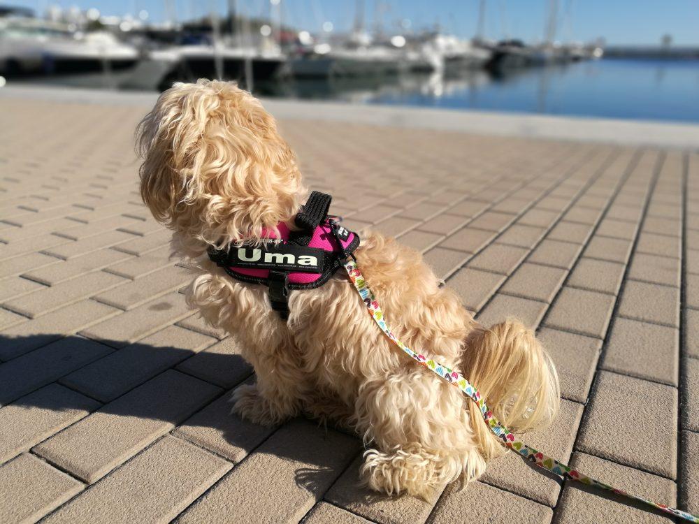 @blogdeuma's cover photo for 'JULIUS-K9®, el arnés para perros sin competencia'