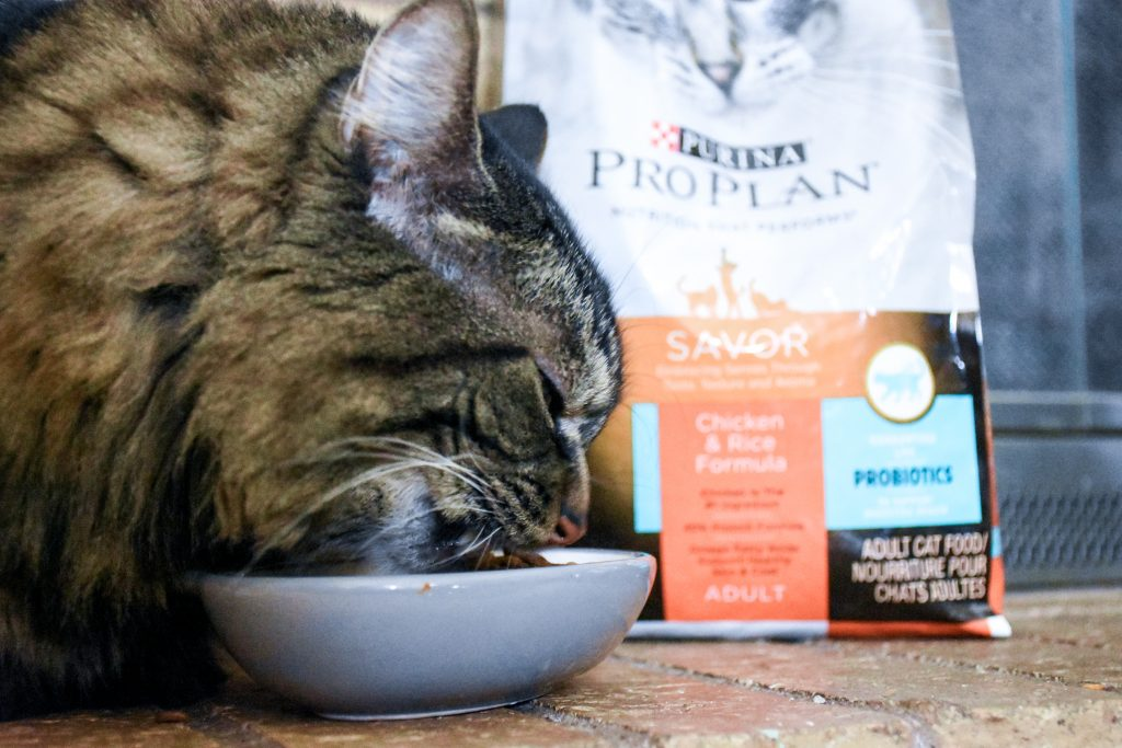 @thebrockblog's cover photo for 'Loved Pets Are Healthy Pets - The Brock Blog'