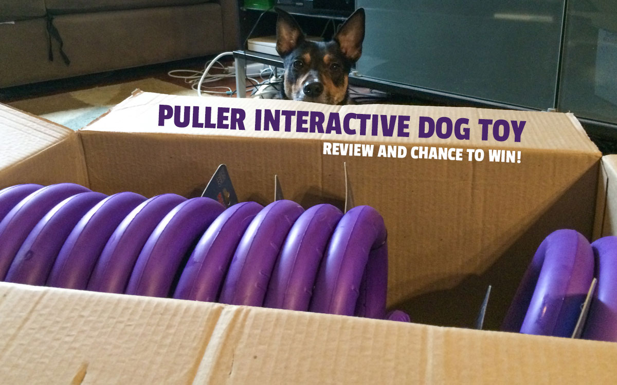 @plantbasedrecipe's cover photo for 'Review: The Puller dog toy for interactive training and exercise * DOGthusiast: for dog enthusiasts with active dogs'