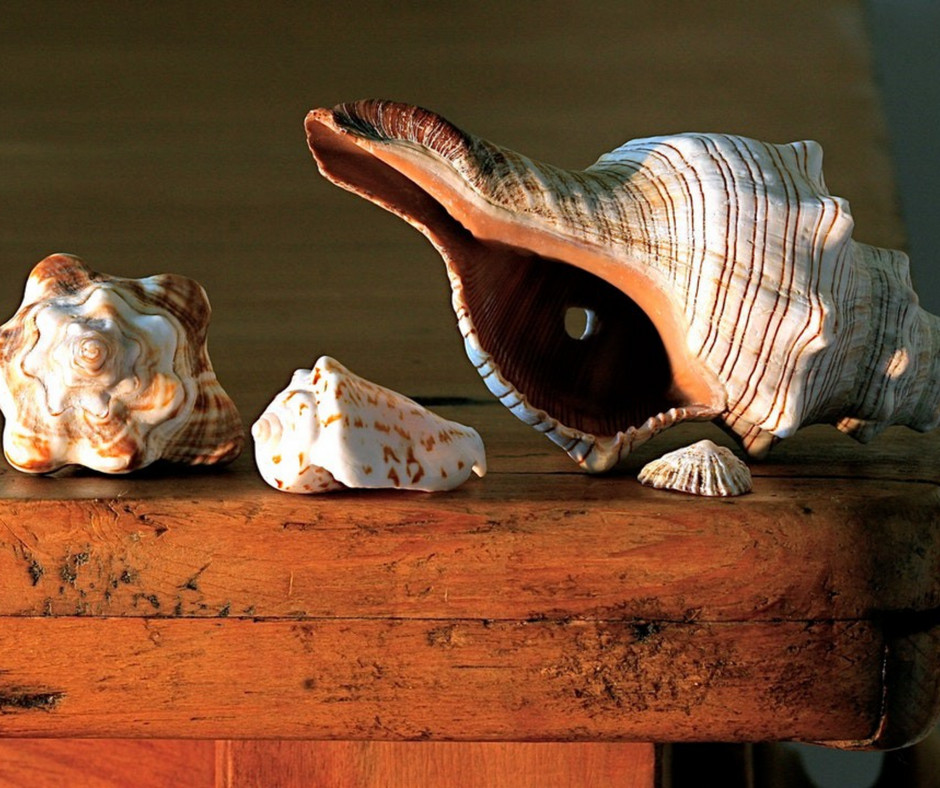 @crystallmccann_'s cover photo for 'Affordable Coastal Decorating for Your Thanksgiving Gathering - Crystal L McCann'