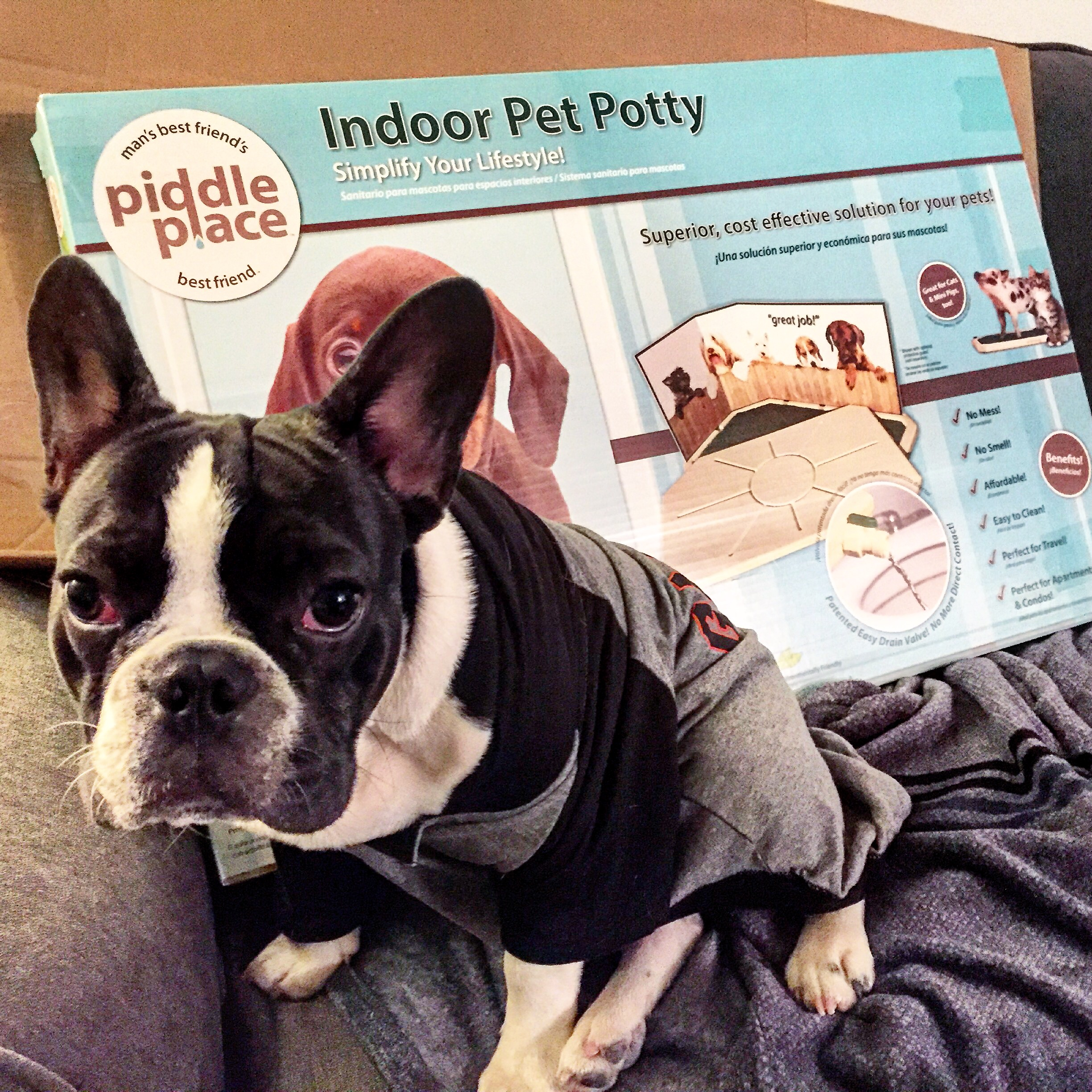 @freddythefrench's cover photo for 'How Long Does It Take To Potty Train A Dog? | Freddy The French - The Celebrity French Bulldog'