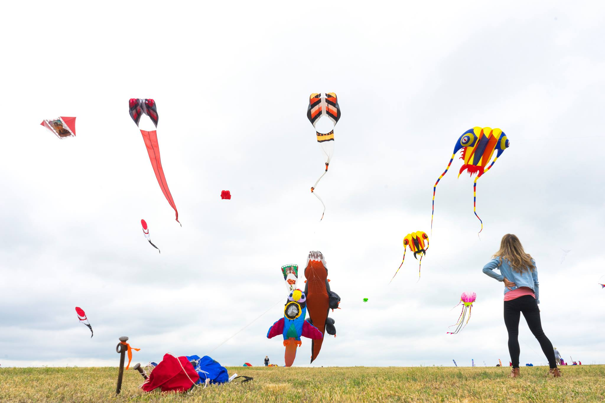 @thelostgirlsguide's cover photo for 'The Art of Flying Kites at the Windscape Kite Festival - The Lost Girl's Guide to Finding the World'