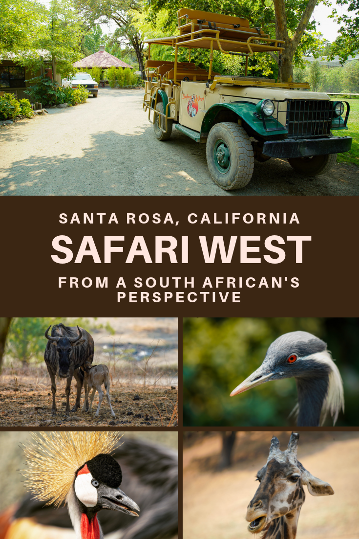 @sanityfound's cover photo for 'Safari West - A piece of Africa in California | Sanityfound'