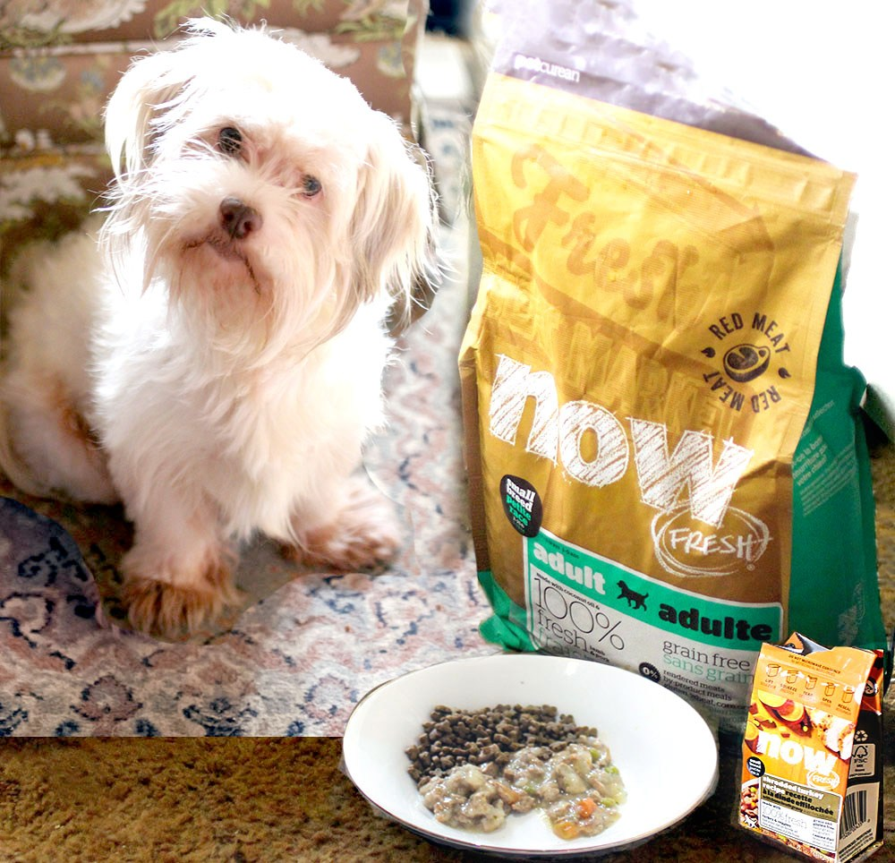 @amberkillmon's cover photo for 'Do You Have Picky Pets? Find Out How Petcurean NOW FRESH™ Wet Food Helped Us'