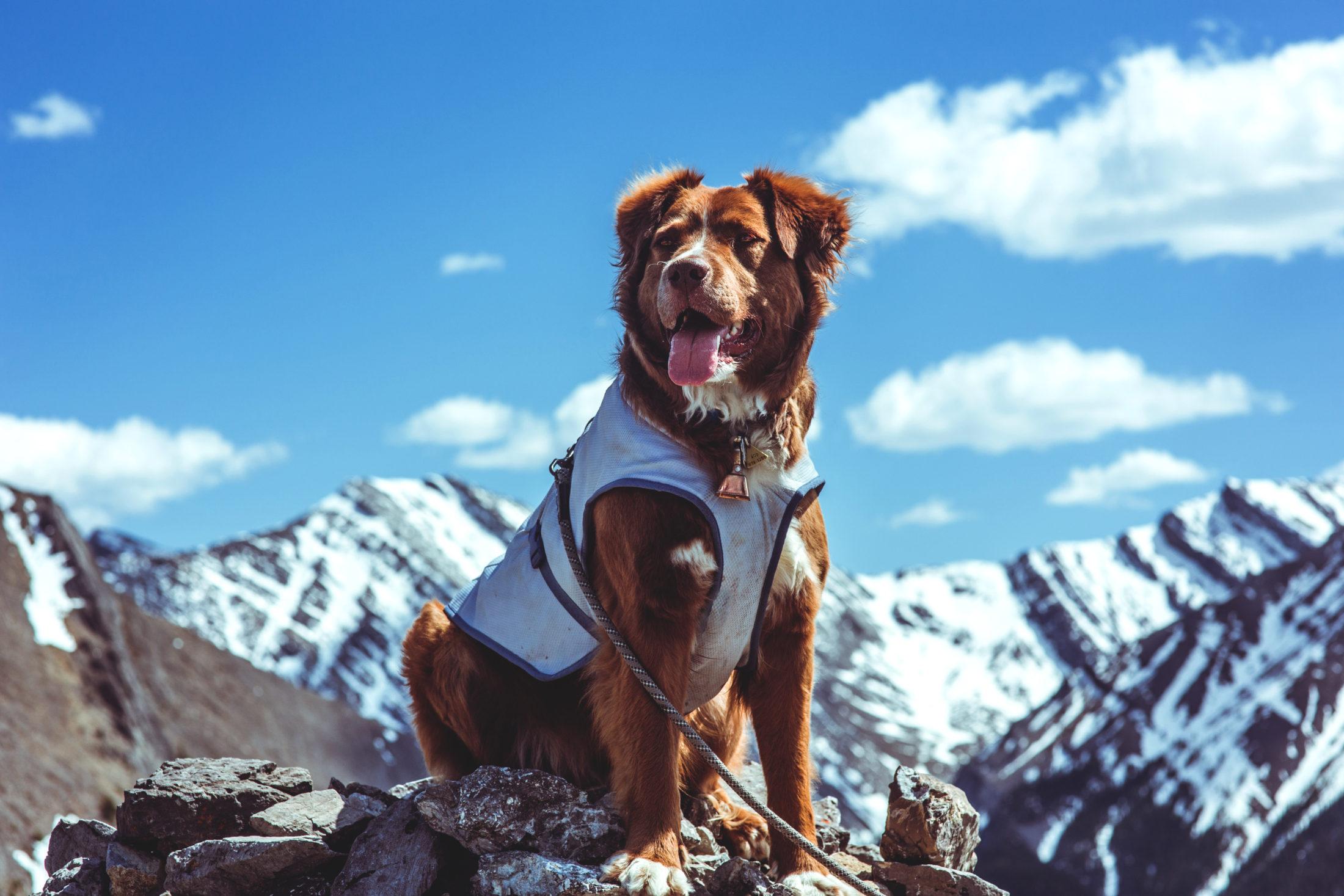 @reggieandthevan's cover photo for 'Kurgo Dog Core Cooling Vest'