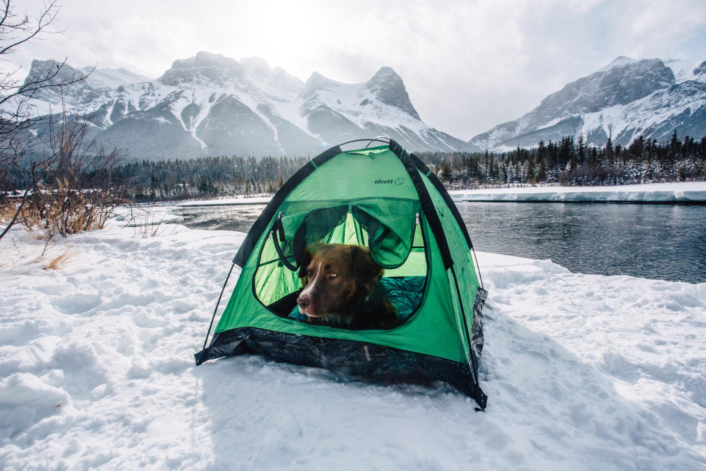 @reggieandthevan's cover photo for 'Alcott Explorer Pup Tent'