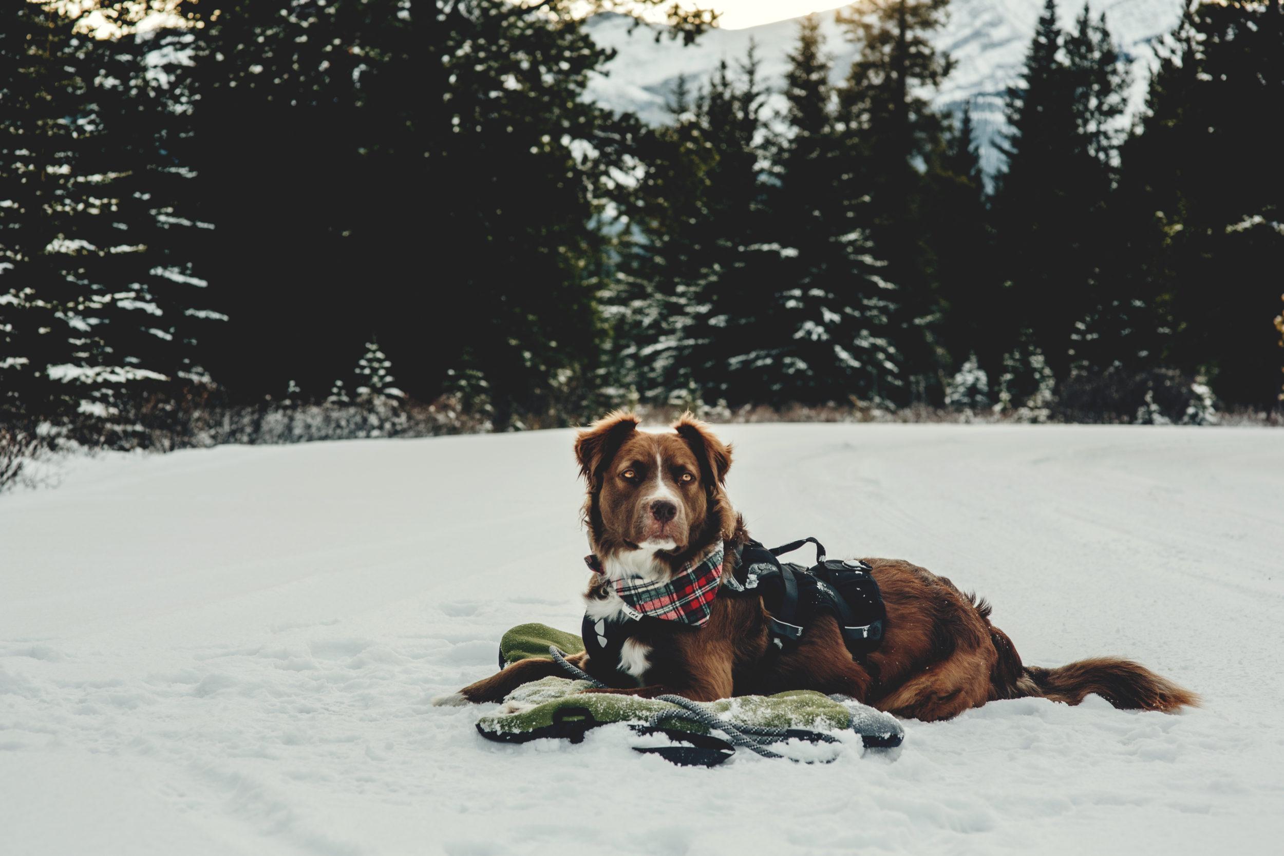 @reggieandthevan's cover photo for 'Pet Life Helios Combat-Terrain Outdoor Dog Bed'